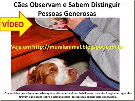 Cães Observam e Sabem Distinguir Pessoas Generosas
