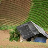 Farmer (5).jpg