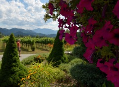 admiring the gardens at Troon Winery