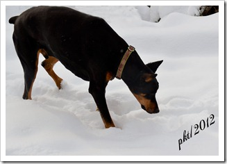 DSC_6858Jefferson-in-snow