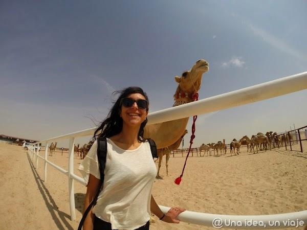 Qatar-Doha-Camellos-1.jpg