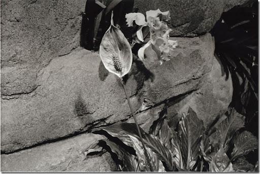 Botanical-Gardens-12-AP-56-Y-6-M-9