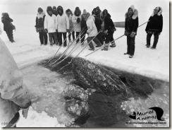 milagre-baleias (6)