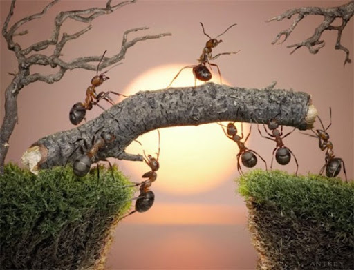 Life-of-Ants-Andrey-Pavlov-25