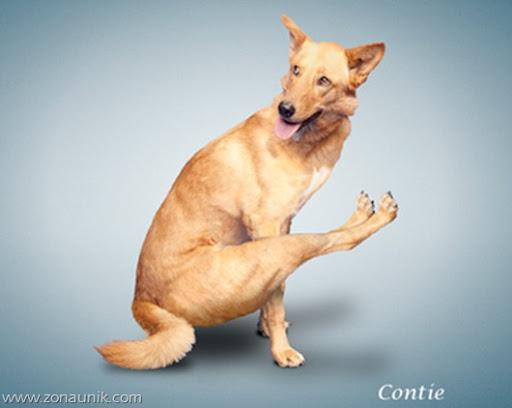 Anjing Senam Yoga (11)