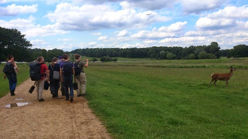 Earthworm Society of Britain members admiring deer in Richmond Park