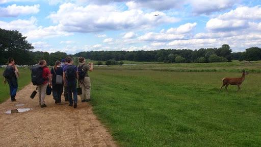 Earthworm Society of Britain members admiring deer in Richmond Park