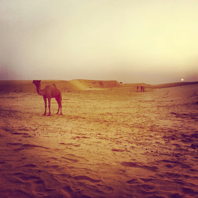 The desert outside Jaisalmer
