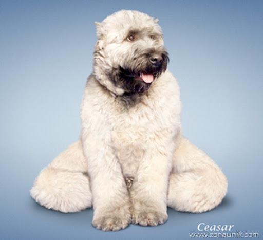 Anjing Senam Yoga (5)