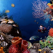 Bunaken Underwater.jpg