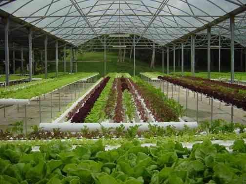 Hidroponic garden