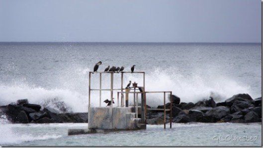 Cormorants & waves crashing Strandfontein Beach False Bay R310 Cape Pennisula South Africa