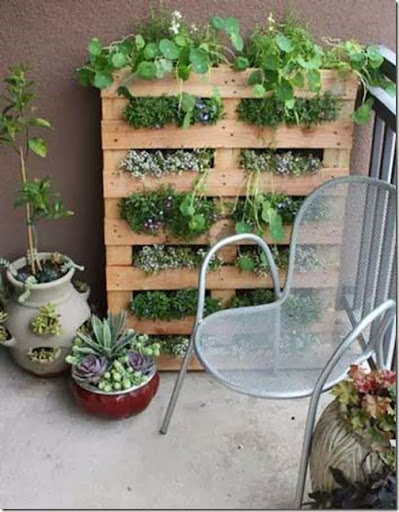 DTL Herbs LTD Small Space Gardening Ideas
