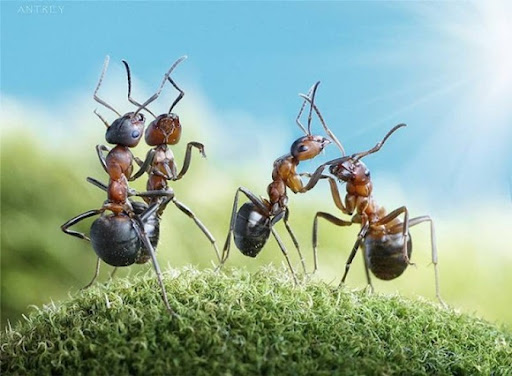 Life-of-Ants-Andrey-Pavlov-28