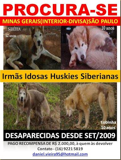 hushies_procurase