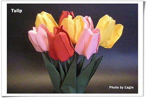 Eagle 摺紙: 摺紙 鬱金香 Tulip