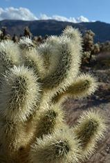 the desert 1_078DSC_0078