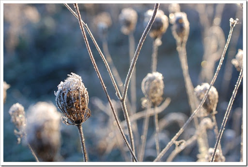 Frosty Morning (5)