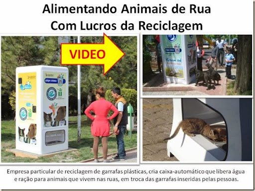 Alimentando Animais de Rua