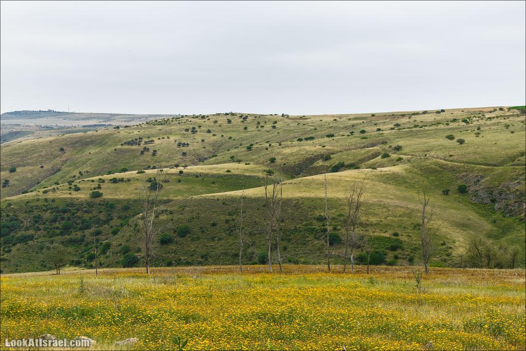LookAtIsrael.com: Фото-блог о путешествиях по Израилю. Тель Авив, Иерусалим, Хайфа И вот мы уже идем вдоль холмов вади Тавор. Они уже не зеленые, но еще и не желтые. Они плюшевые.