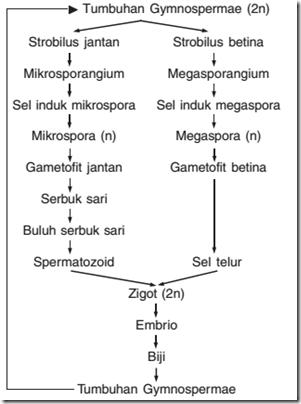Tumbuhan Gymnospermae Dan Angiospermae : tumbuhan, gymnospermae, angiospermae, Kumpulan, Perbedaan:, Reproduksi, Gymnospermae, Angiospermae