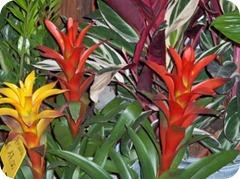 10 piante dappartamento che ripuliscono laria di casa  Green Galletti