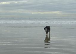 Abby at the Dog Beach on Coronado