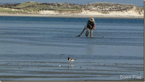 Birding south beach_025