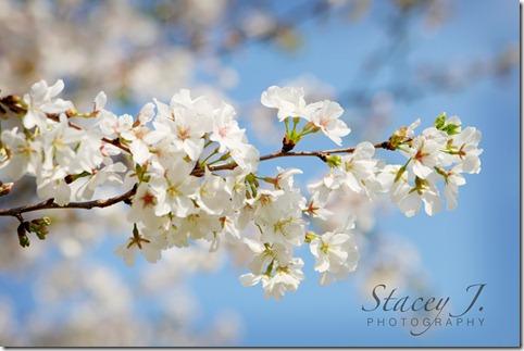 Spring 2012 001 copy