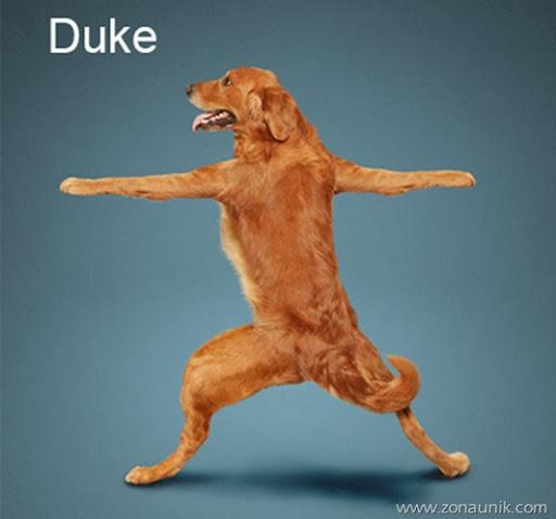 Anjing Senam Yoga (7)
