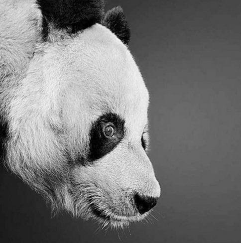 Desenho de panda feito à lápis