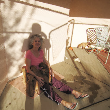 Rhodesian Ridgeback Puppy Socialization 12