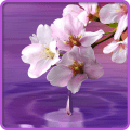 /APK_Water-Drop-Flowers-and-Leaves_PC,29365825.html