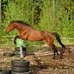 Live Hest Paper BETATEST APK