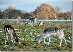 Deer may safely graze