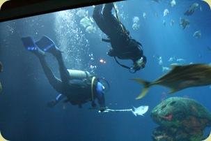 TN Aqua 51