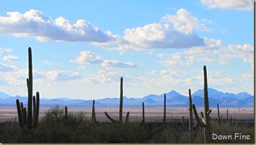 Desert museum_533