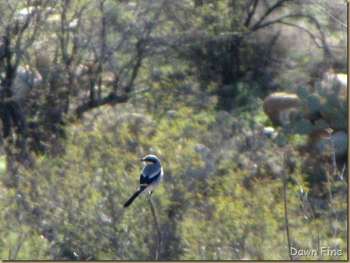 bird walk catalina state park_048