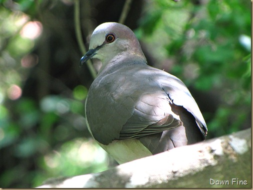 Birding valley nature center_033