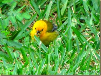 fallout birds padre island_042