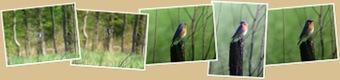 View Blue bird