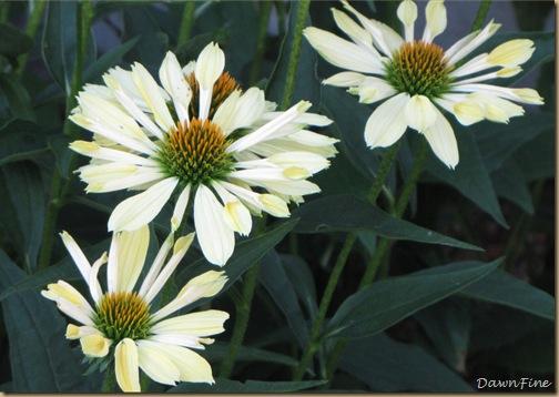 loris garden_20090718_026