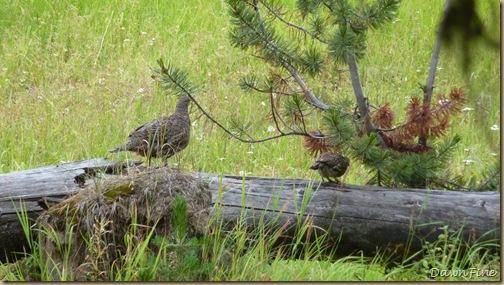 Yellowstone dawns_20090906_042