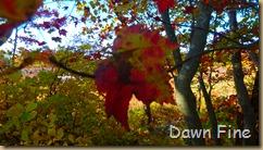Autumn_030