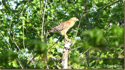 yard birding_020