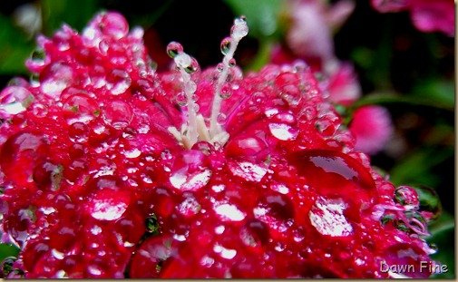 Water droplets and flowers_044