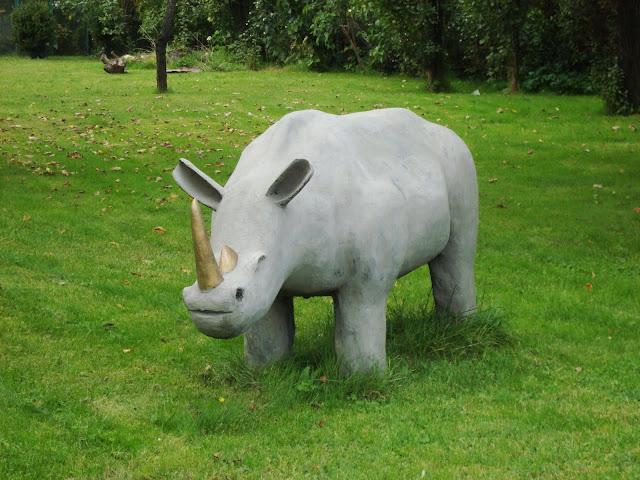 Nosorożec - Koszalin