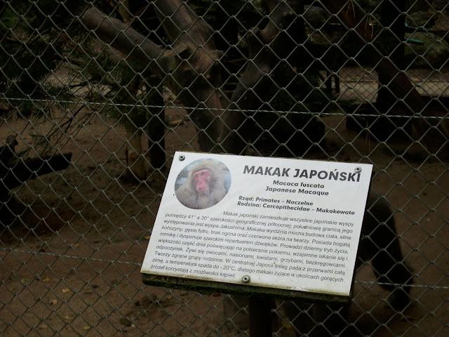 Klatka makaków japońskich
