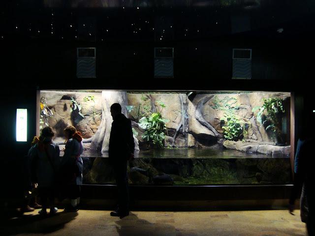 Akwarium zamieszkiwane przez anakondy zielone