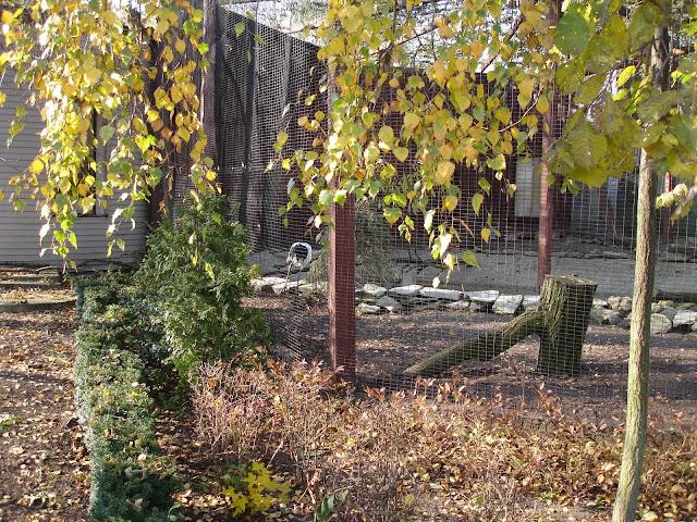 Woliera żurawi mandżurskich